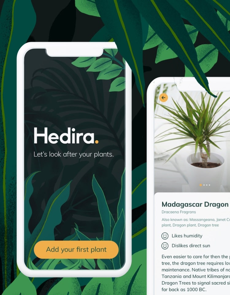 Screens from the Hedira app on a hand-drawn jungle background